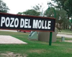 Molle-cartel-1