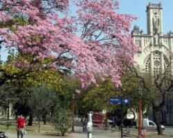Plaza-Colon