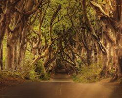 conjunto-de-árboles