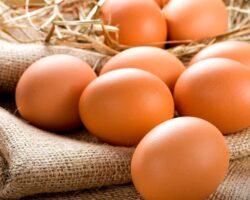 Proteínas-del-huevo