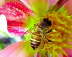 1555013585_archive_0_picaduras_insectos_2_rz1250