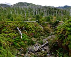 recuperacion-bosque-chaiten.18-06-2021.medio-ambiente-1024×678